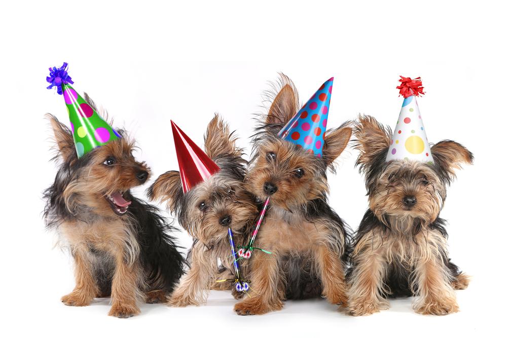 כלבים עם כובע יומולדת