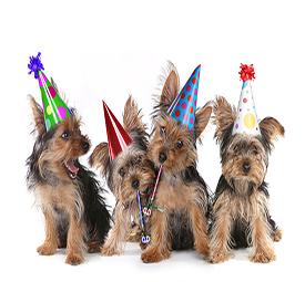 כלבים עם כובעי יומולדת